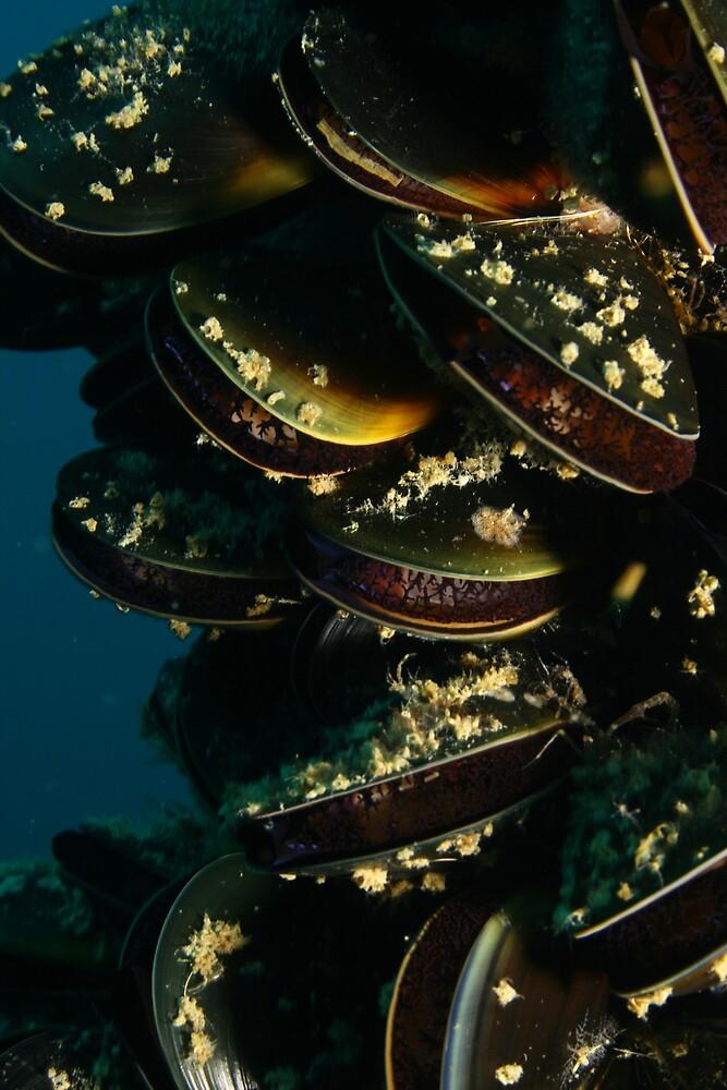 Mussels by Hugh Pederson