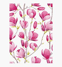 Magnolia Spring Bloom II Photographic Print