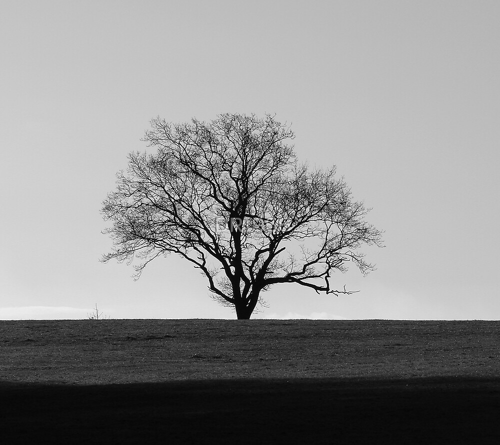 Tree by DR1966