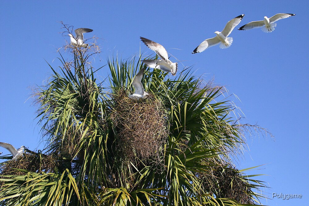 Seagulls in a Date Tree by Polygame