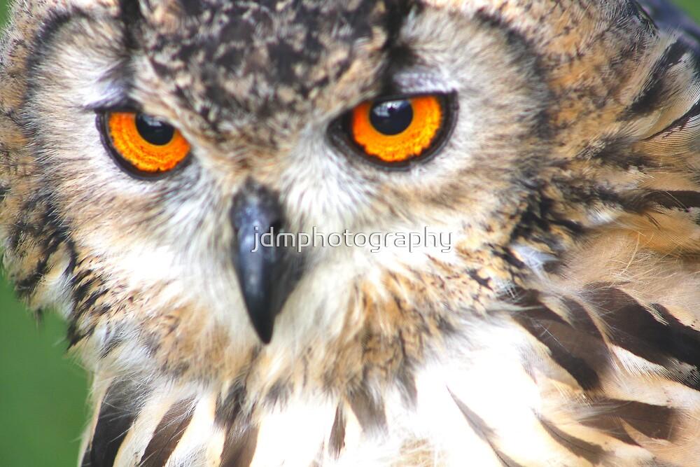 long-eared owl (Beautiful Orange Eyes) by jdmphotography