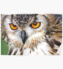 long-eared owl (Beautiful Orange Eyes) Poster