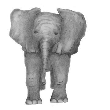 Elephant Baby by Loritaylor