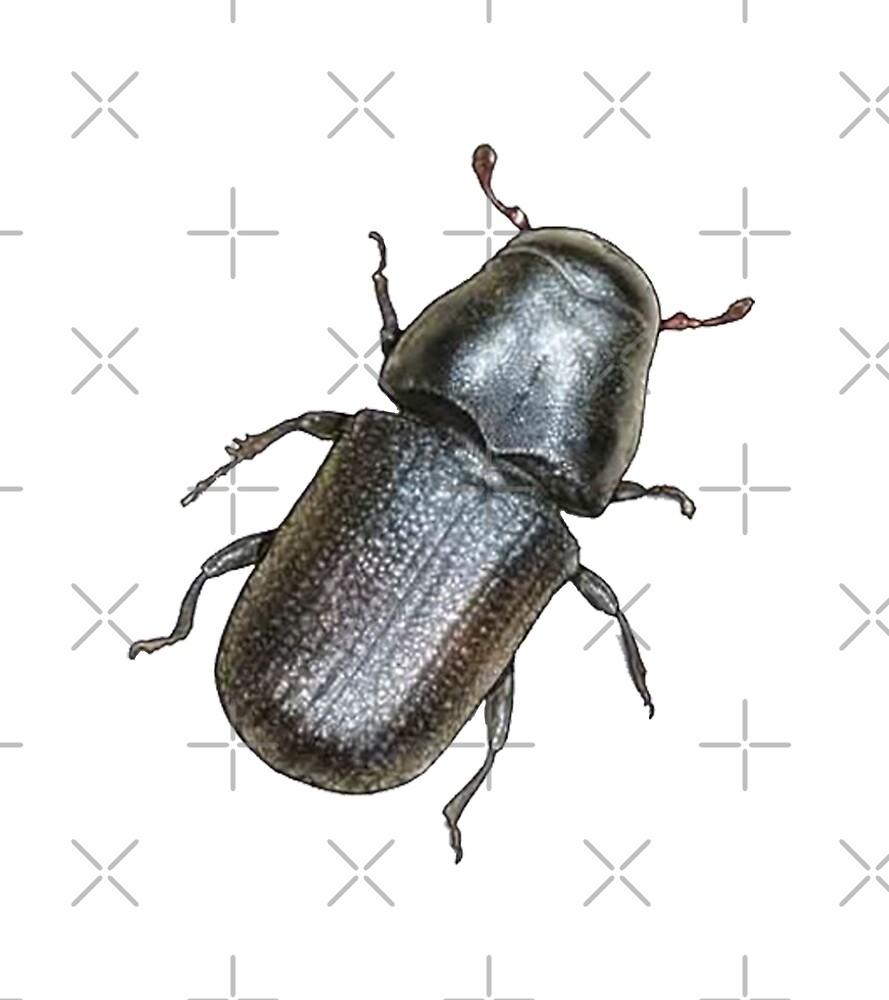 Beetle Mania by NINUNO