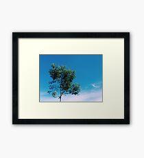 Nature Walk 004 - An Introvert Tree Framed Print