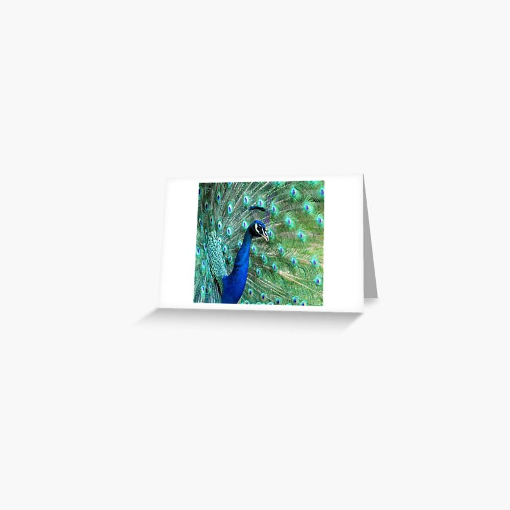 Peacock in bloom Greeting Card