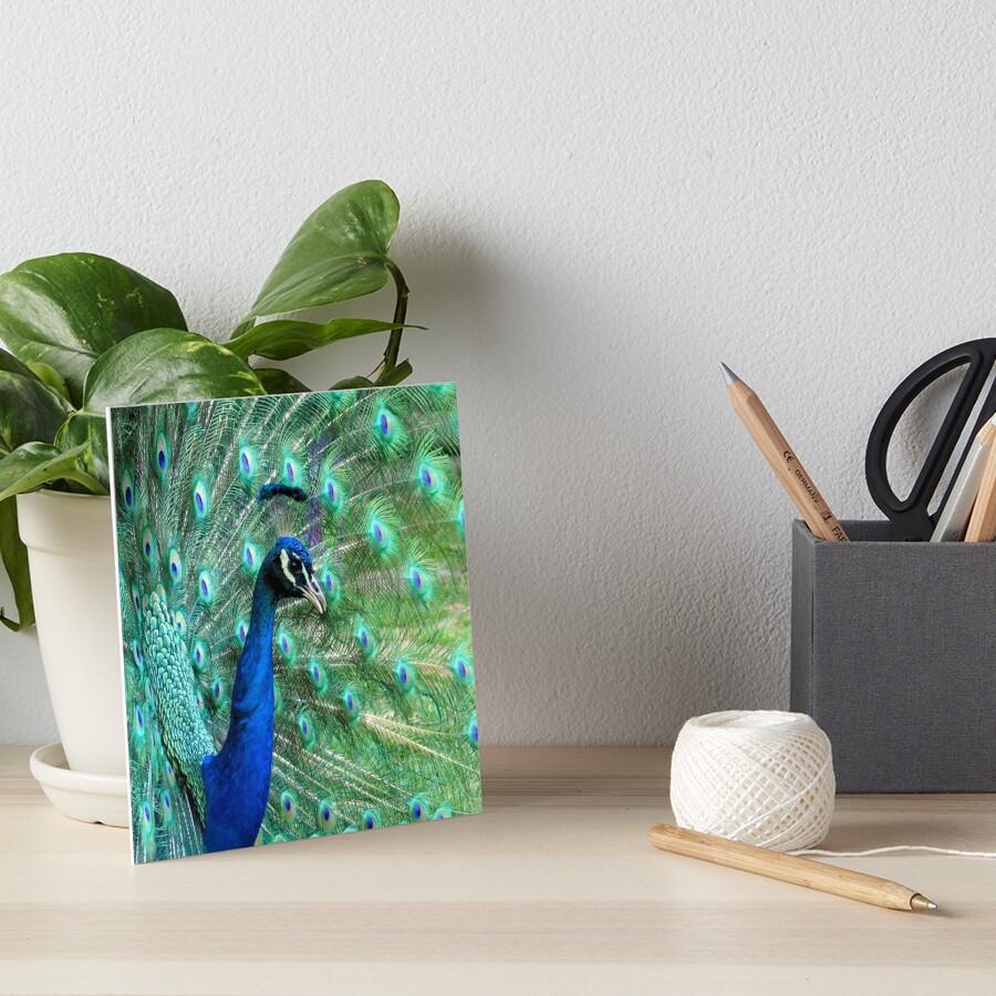 Peacock in bloom Art Board Print