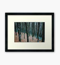Nature Walk 006 - Tranquil Forest Framed Print
