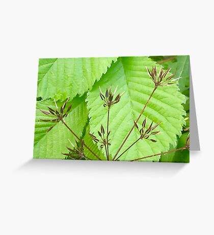 Wild Grass on Leaves Greeting Card