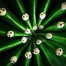 Cactus core by iamelmana