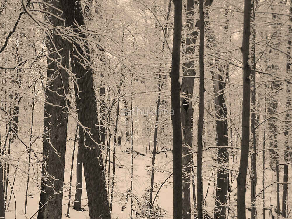 Winter Forest by cathyklima