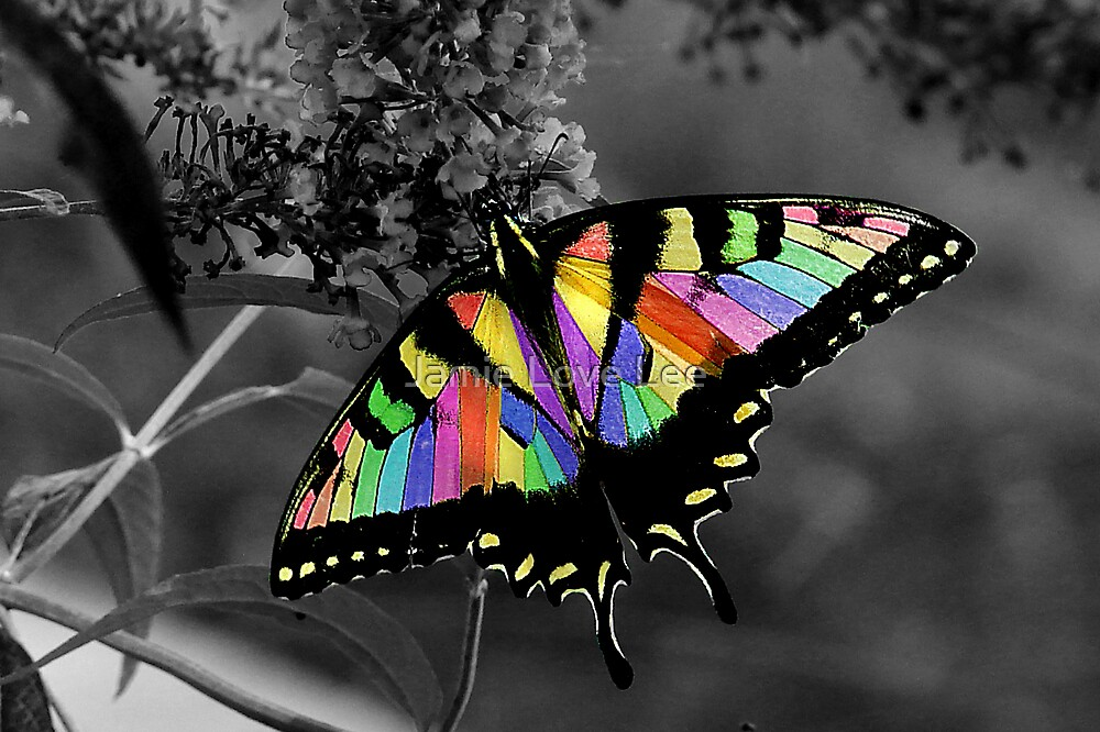 Flutterby by Jamie Lee