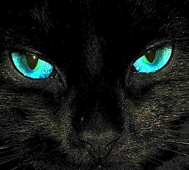 waldo eyes by eraline