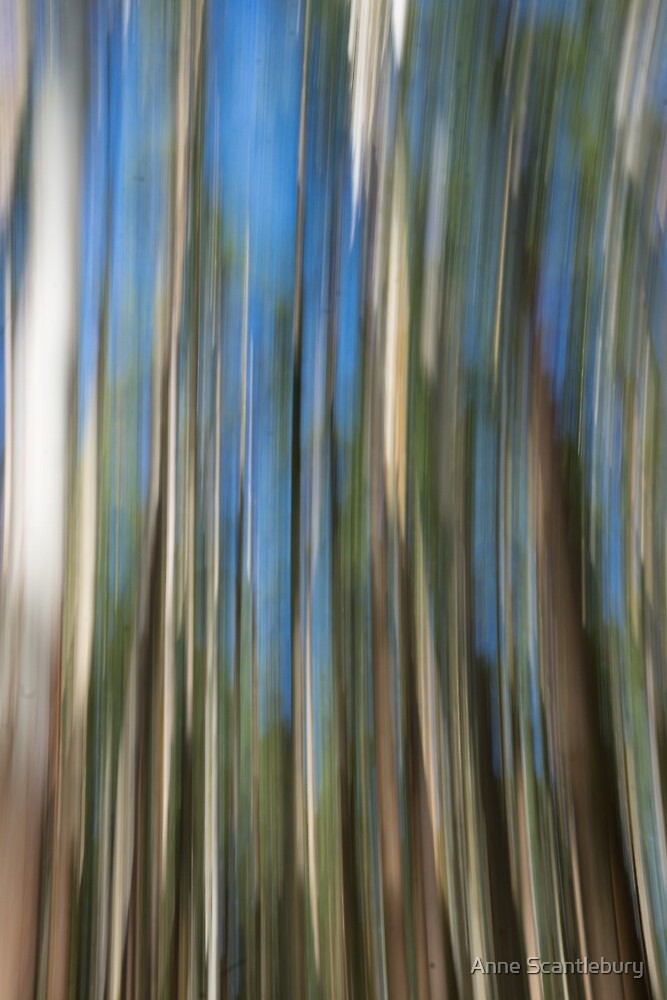 blurred trees by Anne Scantlebury