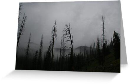 Trepidation by Chase Ankeny