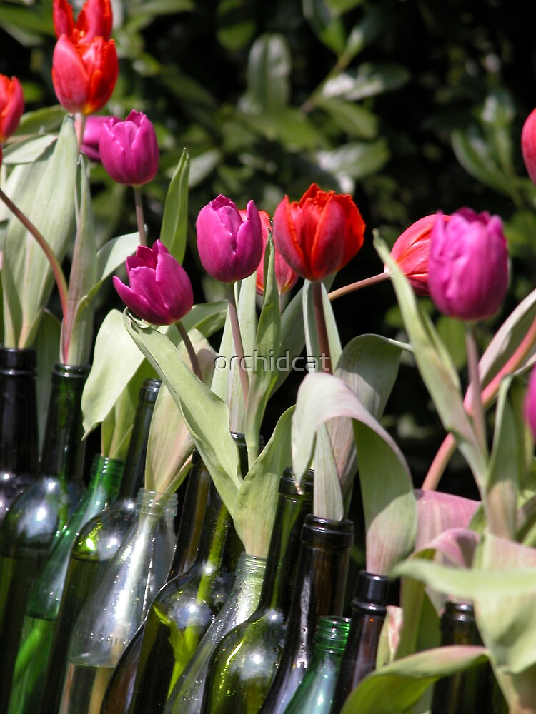 Tulips by orchidcat
