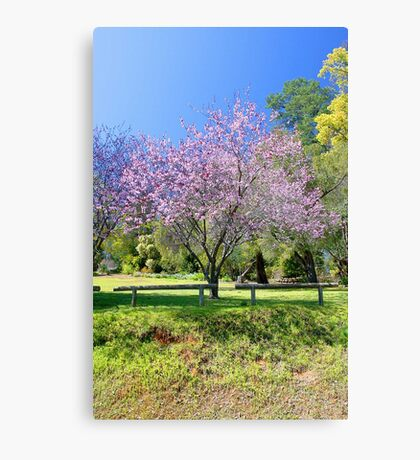 Pink Cherry Blossom Tree Canvas Print