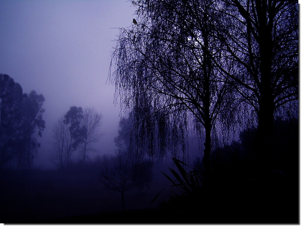 Misty by Tugela