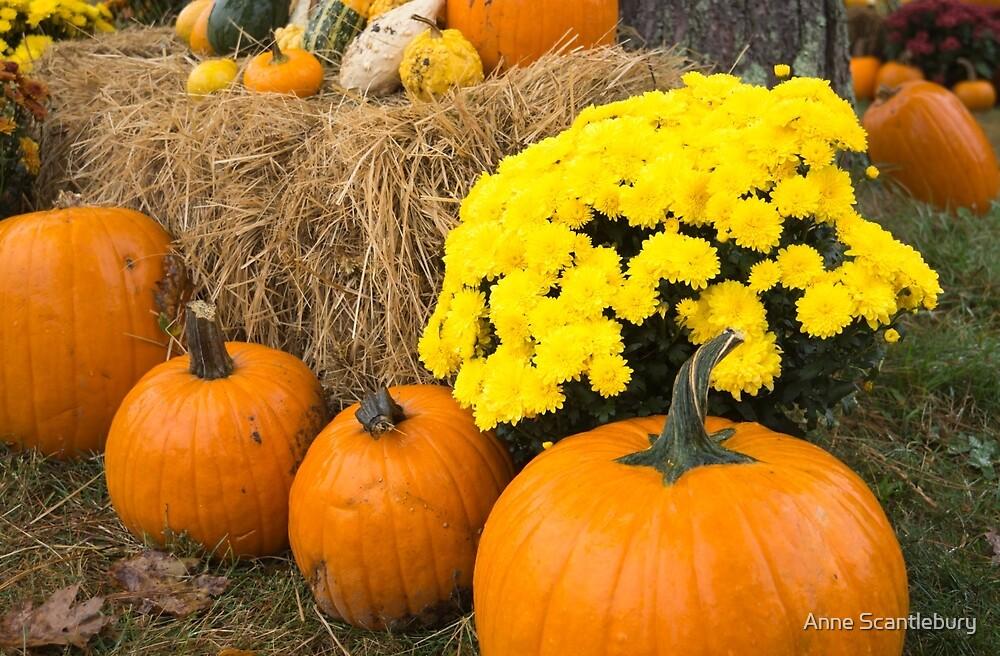 pumpkins in the hay by Anne Scantlebury