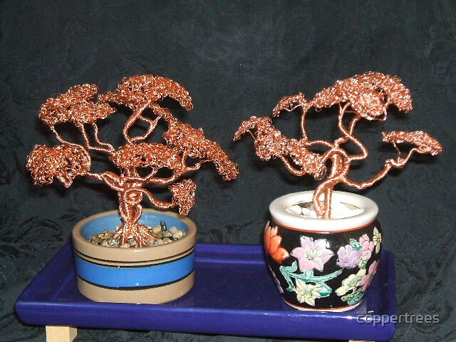 Bonsai Trees by coppertrees