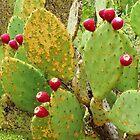 Cactus Berries by Alberto  DeJesus