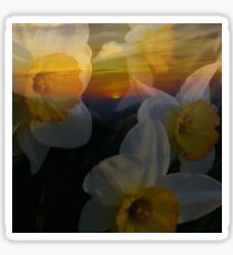 Spring Mountain Sunrise with Daffodils Sticker