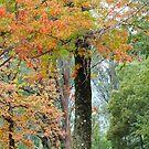 Autumn Splendour by Harry Oldmeadow