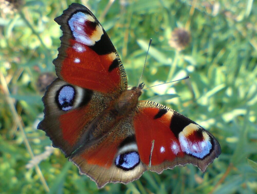 Butterfly Mobile by Steve Wells