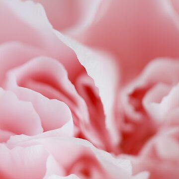 Pink Swirls by christacharlene