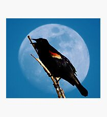March Crow and the Moon Photographic Print