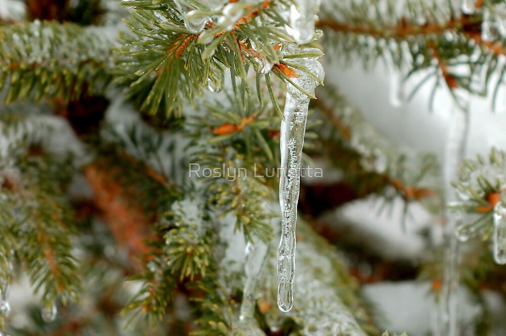 close up of a pine icicle by Roslyn Lunetta