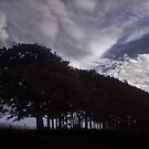 The Tree Train by Wayne King