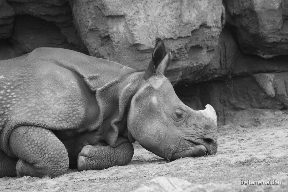 Rhino Nap by beltanemaiden