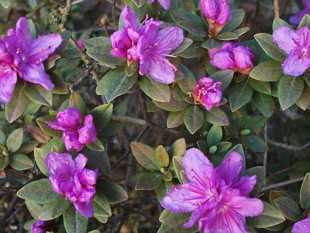 Purple Spring by Abbetha Smith