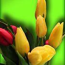 Shades of Spring by Rosemary Sobiera