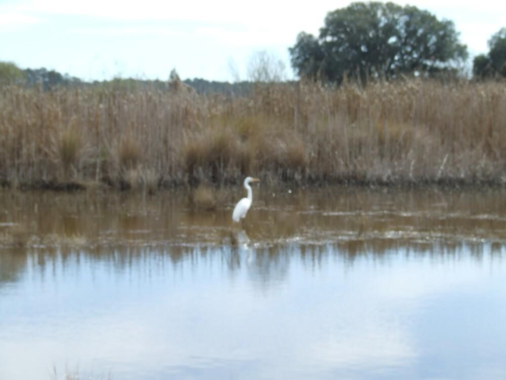 South Carolina Salt Marsh 5 by Ray1945