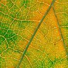 Hint of Fall by David Lamb