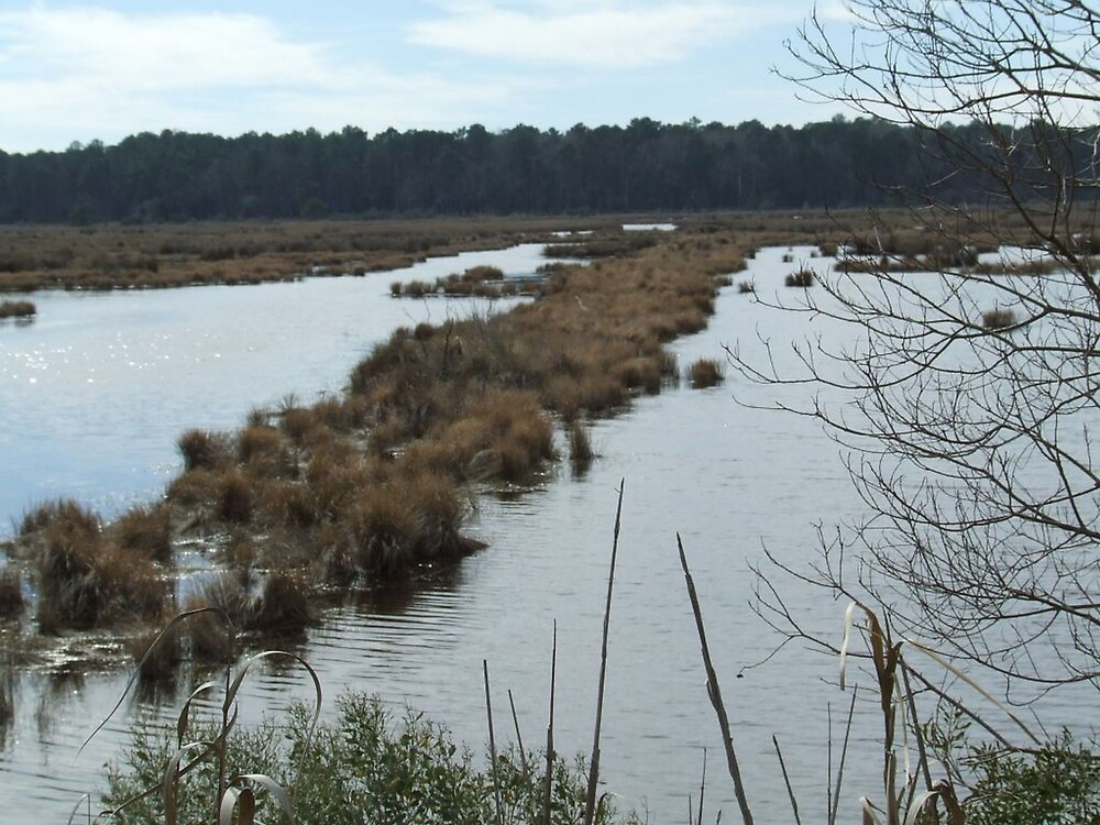 South Carolina Salt Marsh 2 by Ray1945