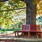 Take a seat_Mt Wilson by Sharon Kavanagh