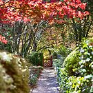That red gate_Mt Wilson by Sharon Kavanagh