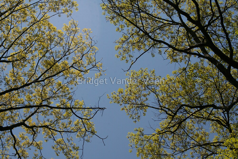 Trees in the sky by Bridget Vander Veen