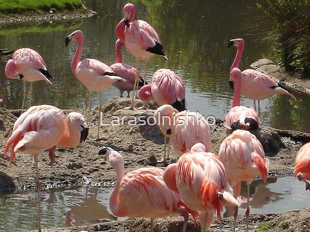 my favorit pink by Larasolnishko