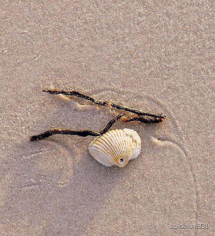 Shells on Sugary Sand by swickham331