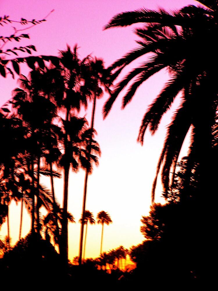 Phoenix Sunrise by pbeltz
