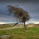 1600 Wind swept by Hans Kawitzki