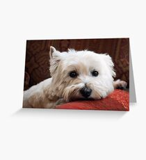 Molly the Westie Greeting Card