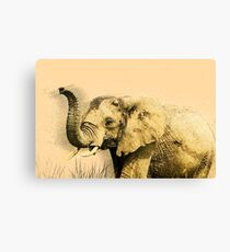 African elephant with raised trunk.  Canvas Print