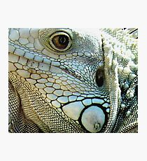 IGUANA EYES Photographic Print