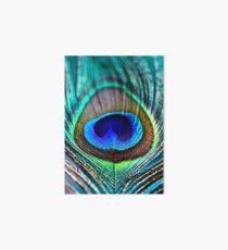Peacock Feather Art Board