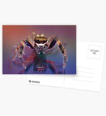 Jumping spider Postcards